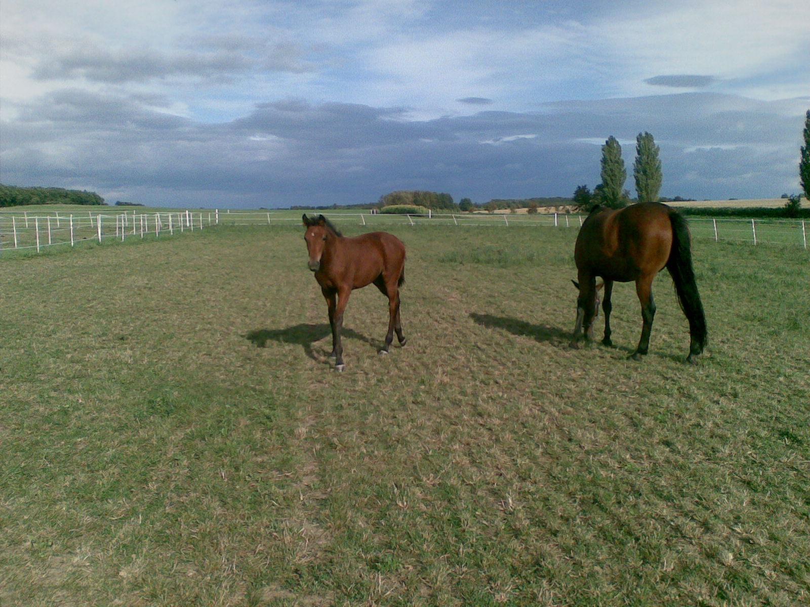 ustajeni pro kone